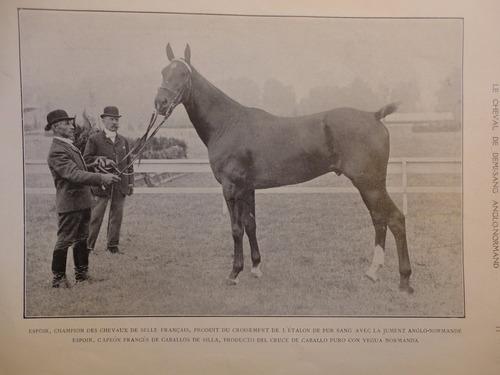 le cheval francais el caballo frances