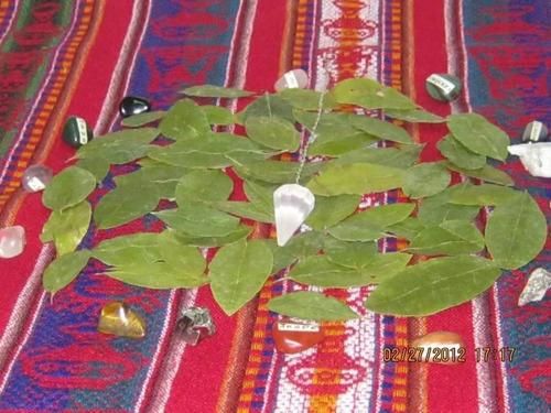 lectura acertada  de hojas de coca en san borja lima perú