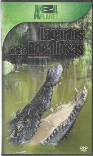 legoz zqz dvd - lagartos de las rocallos- sellado - ref- 943