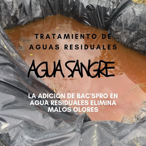 lenteja de agua lemna - laguna de oxidación