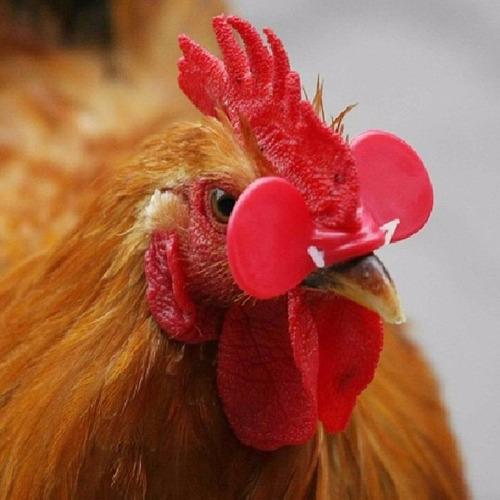 lentes antipicaje para gallinas pollos bebederos gafas