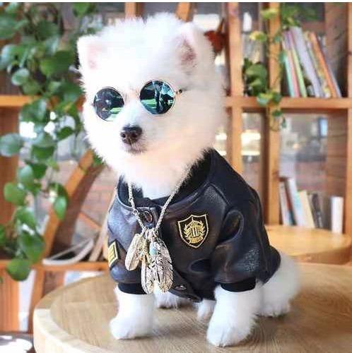 lentes para gatos y perros pequeños
