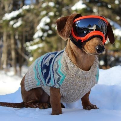 lentes para perros rex specs® negros (protección rayos uv)