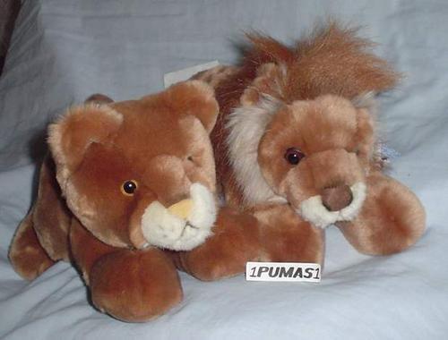 leones macho o hembra o tigre mediano aurora