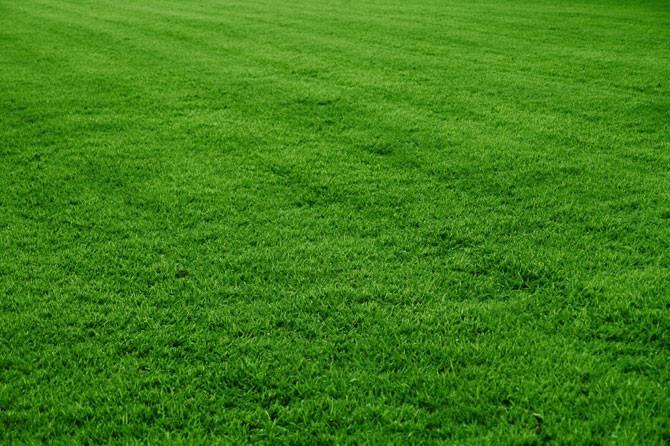 Libra cesped semilla jardin jardines pasto gramma sierra - Semillas de cesped para jardin ...