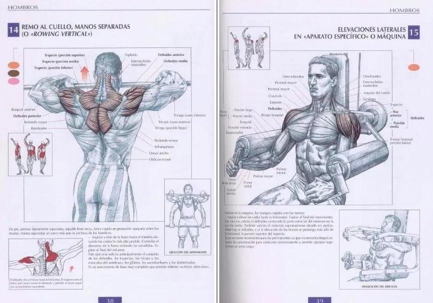 Libro Anatomia De Los Movimientos Musculares Fisioterapia - U$S 5,00 ...