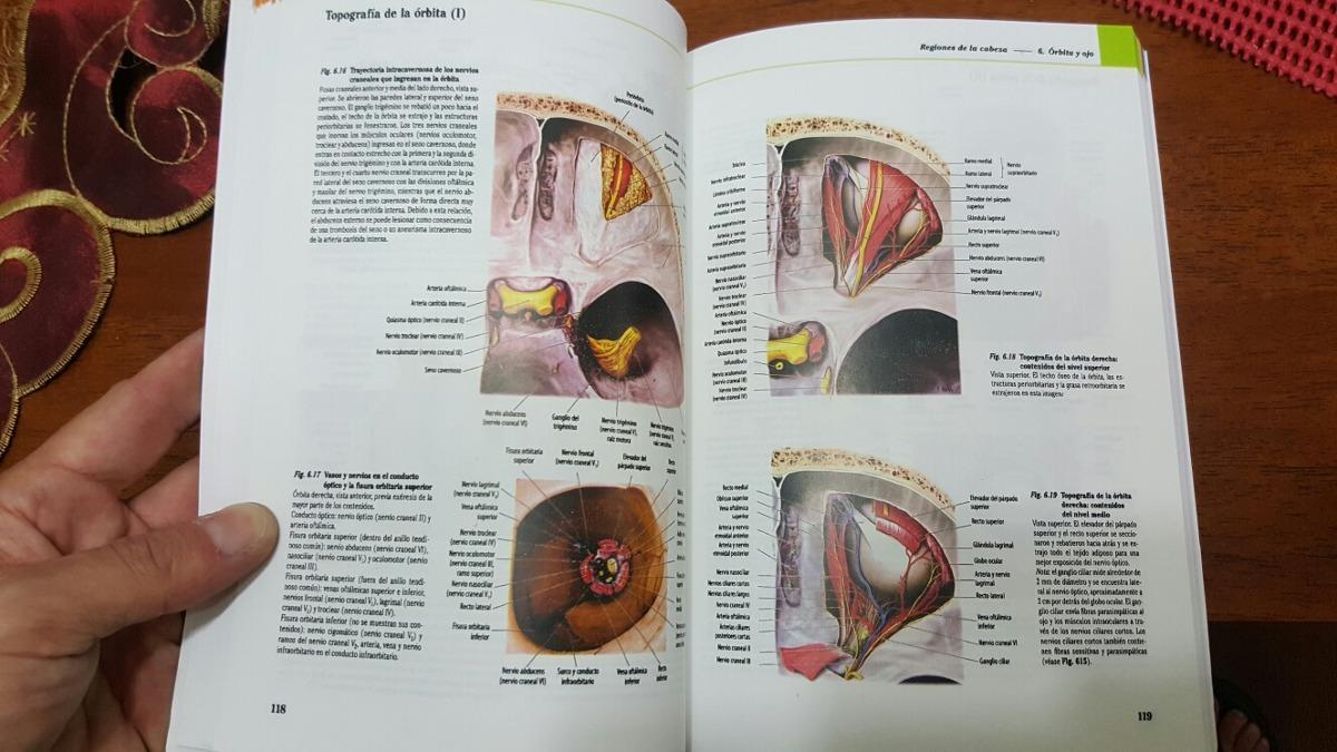 Hermosa La Parte Superior De La Anatomía Cabeza Molde - Anatomía de ...