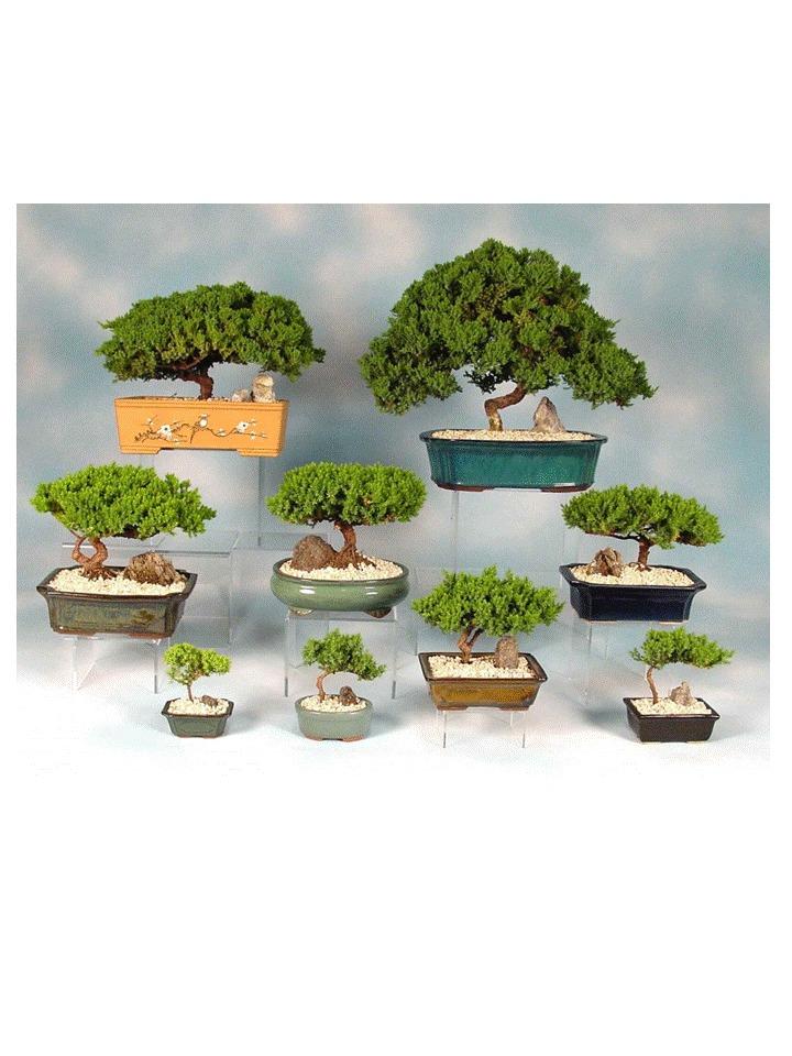Libro bonsai bs en mercado libre - Libros de bonsais ...