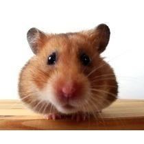 libro: conejos, hamsters y otros roedores - pdf