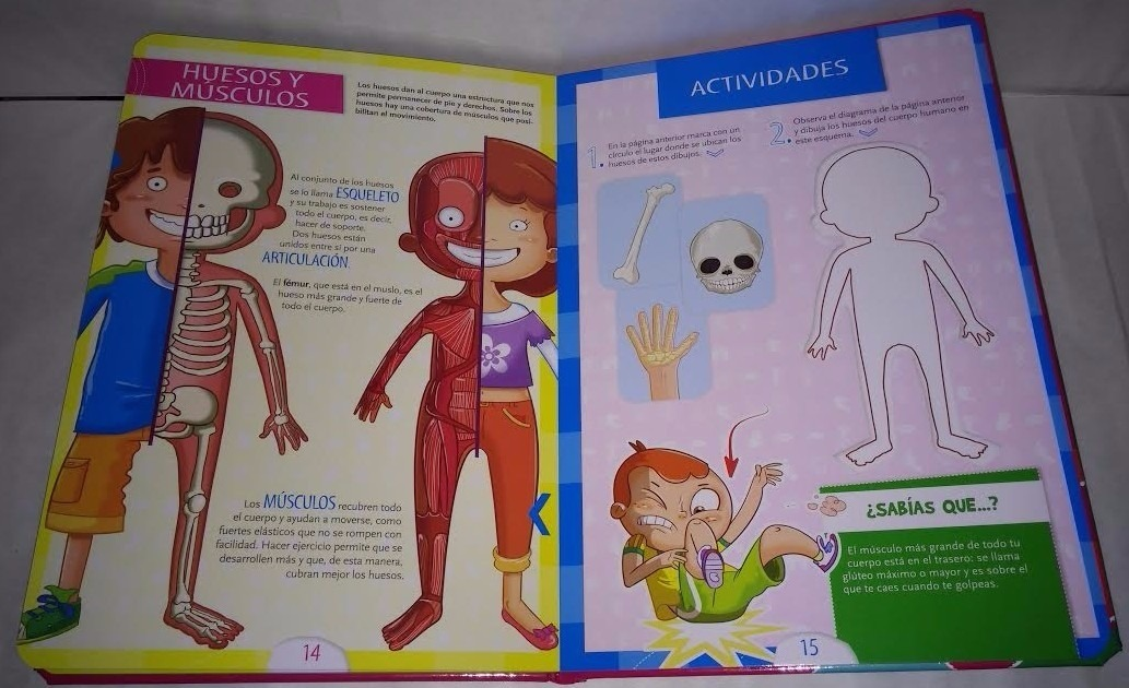 Moderno Diagrama No Marcado Del Esqueleto Humano Ilustración ...