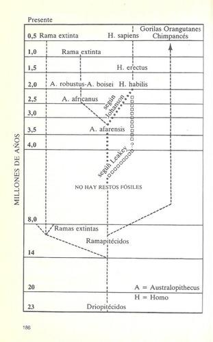 libro de biología : evolución de la conducta humana - fisher