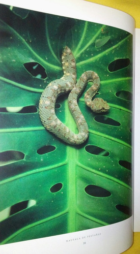 libro de fauna mexicana