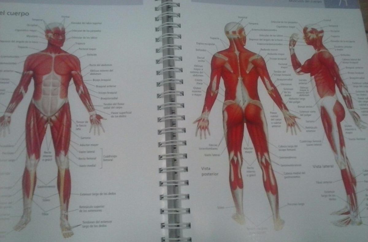 Increíble Anatomía Y Fisiología Hoja Términos Direccionales Bosquejo ...