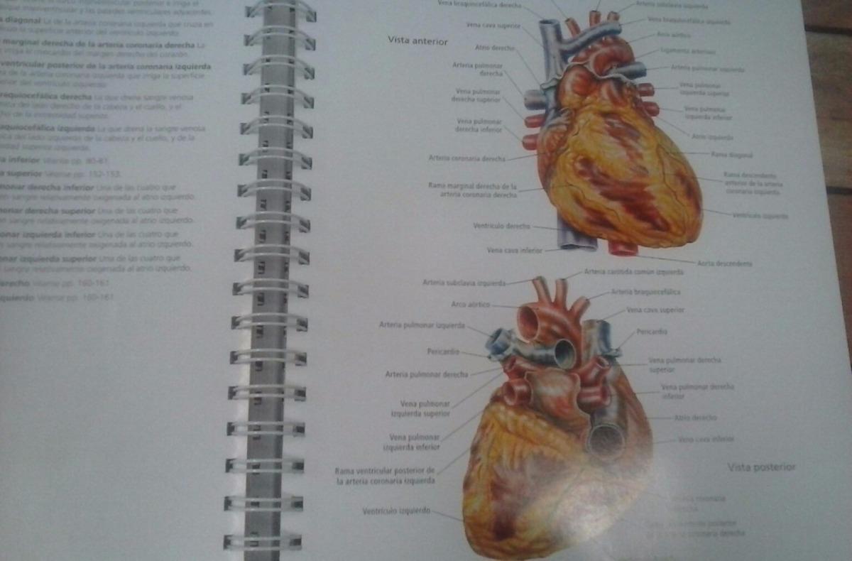 Perfecto Respuestas Del Libro Para Colorear De Anatomía Componente ...