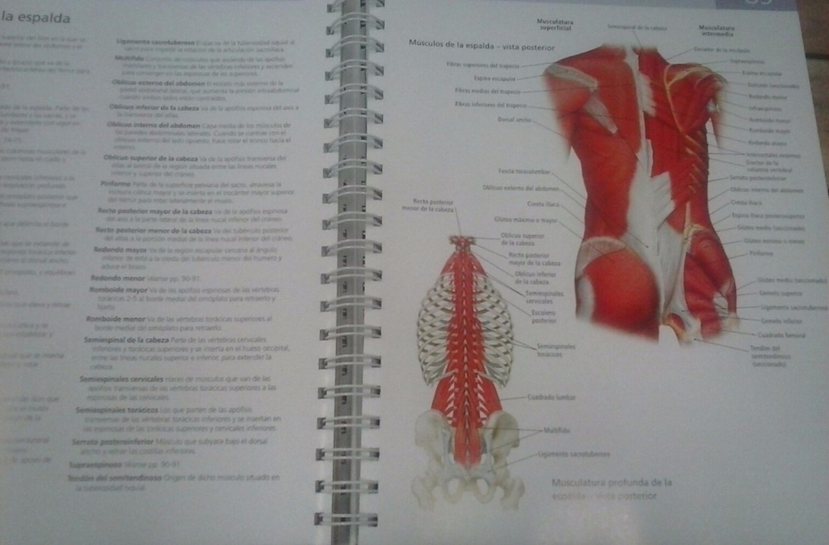 Encantador Libro De Colorear De Anatomía Ideas - Dibujos Para ...