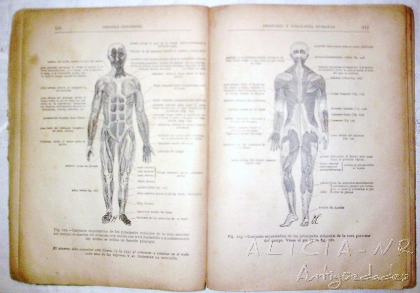 Excelente Marieb Edición De La Anatomía Y La Fisiología Humana ...