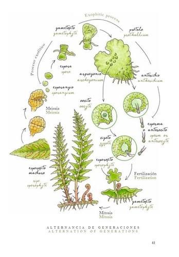 libro: helechos del bosque húmedo templado patagónico
