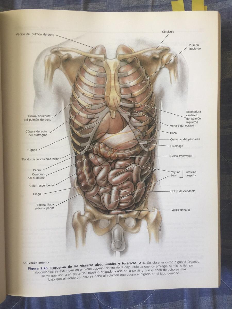 Libro De Medicina Anatomía De Moore 4 Edición - $ 500.00 en Mercado ...