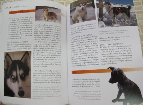 libro: perros de raza pator boyero pinscher moloso schnauzer