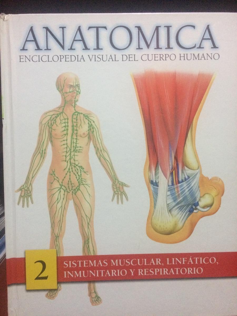 Encantador Anatomía De Un Ternero Embellecimiento - Imágenes de ...
