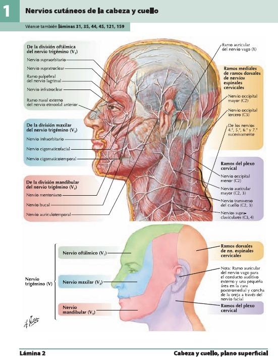 Libros Medicina De Atlas De Anatomía Humana Netter 5 Edición ...