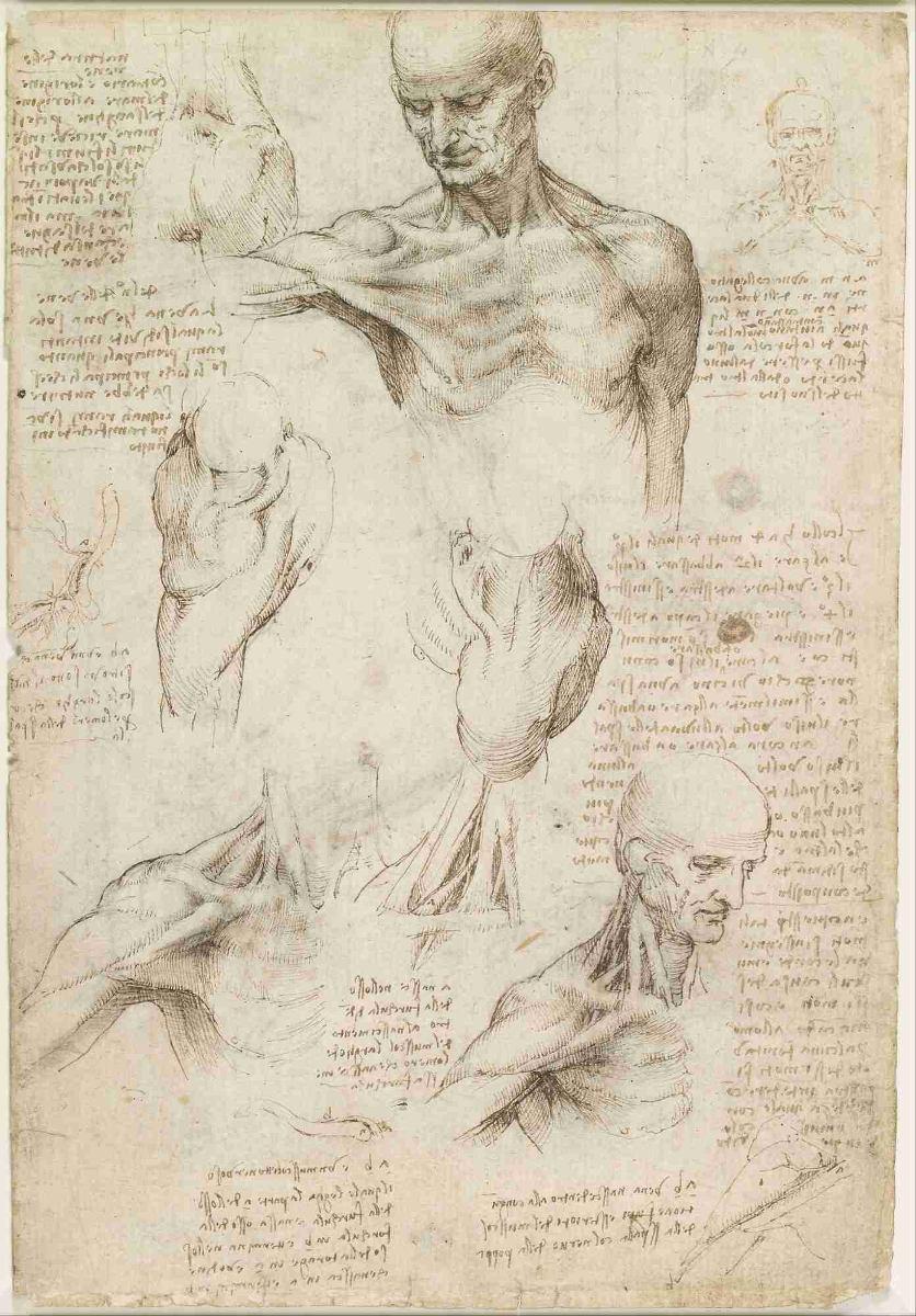 Lienzo Tela Anatomía Hombro Leonardo Da Vinci 73 X 50 Cm - $ 750.00 ...