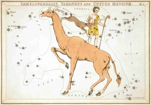 lienzo tela constelaciones año 1825 carta astronómica 50x72