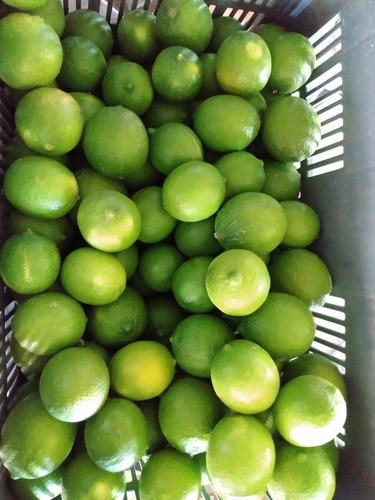 limón persa de primera calidad
