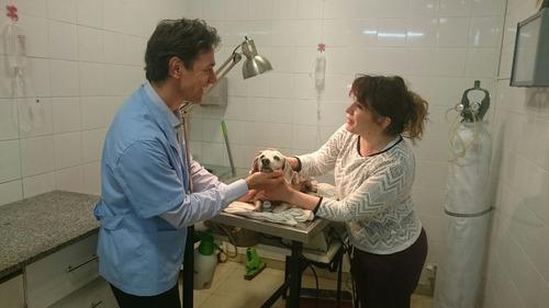 limpieza dental en perros sin anestesia, sarro canino/felino