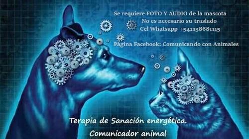 limpieza energética para animales y mascotas