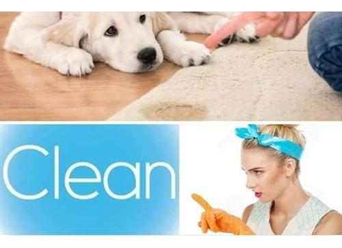 limpieza y sanitizado de alfombras