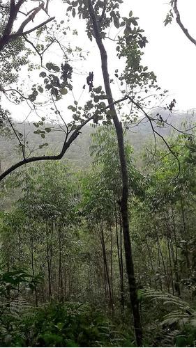 linda área para parque ecológico e de plantio de eucaliptos