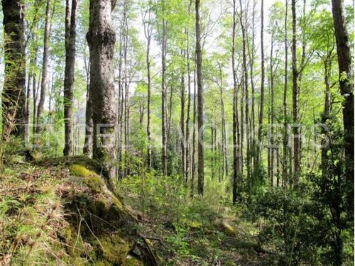 linda parcela con bosque cerca de pucón