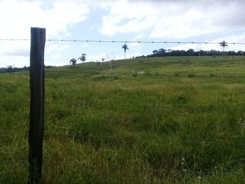 linda propriedade 43 alqueires com plantação de pupunha