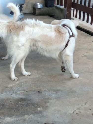 lindo cão para adoção