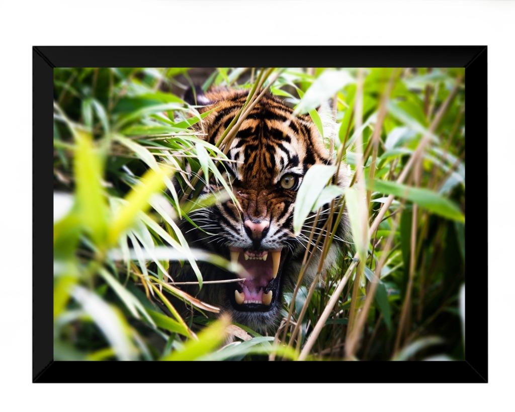 Lindo Quadro Decorativo Tigre Natureza Selvagem 42x29cm