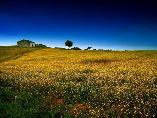 lindo terreno para você morar com sua família 018