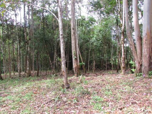 lindo terreno plano, riacho , bosque, refe: 04591