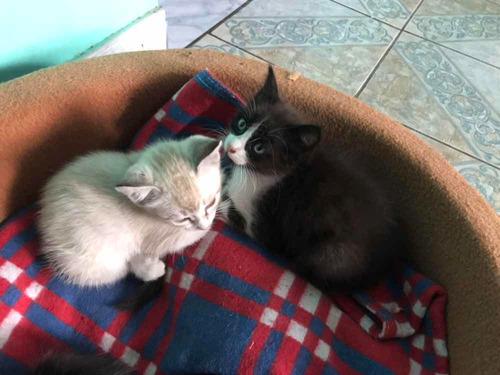 lindos gatitos, adopcion responsable
