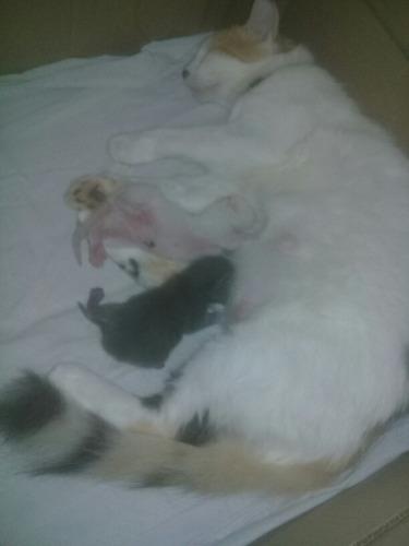 lindos gatitos en adopcion santa marta