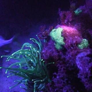 linterna aquatica ultravioleta