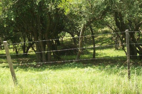 liquido terreno en comuna la paisanita amojonado natural