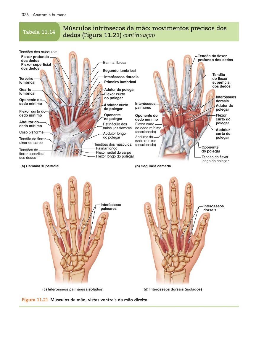 Contemporáneo Anatomía Humana Elaine Marieb Y 9ª Edición Fisiología ...