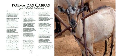livro arca brasileira: uma viagem pelo brasil e seus animais