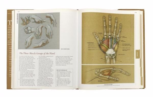 Livro Classic Human Anatomy The Artists Guide R 26300 Em