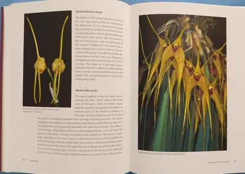 livro: masdevallias - gems of the orchid world