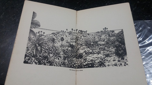 livro palm groves and humming birds - 1924!!!