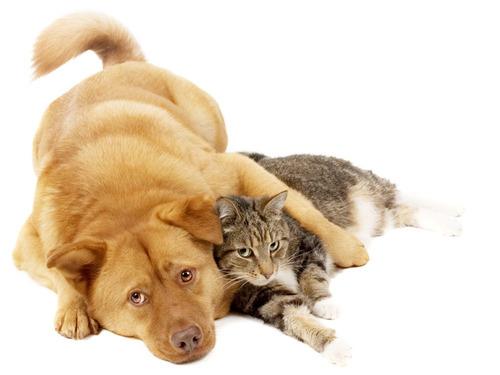 lixadeira unha de cães & gatos produto para pet shop lixa