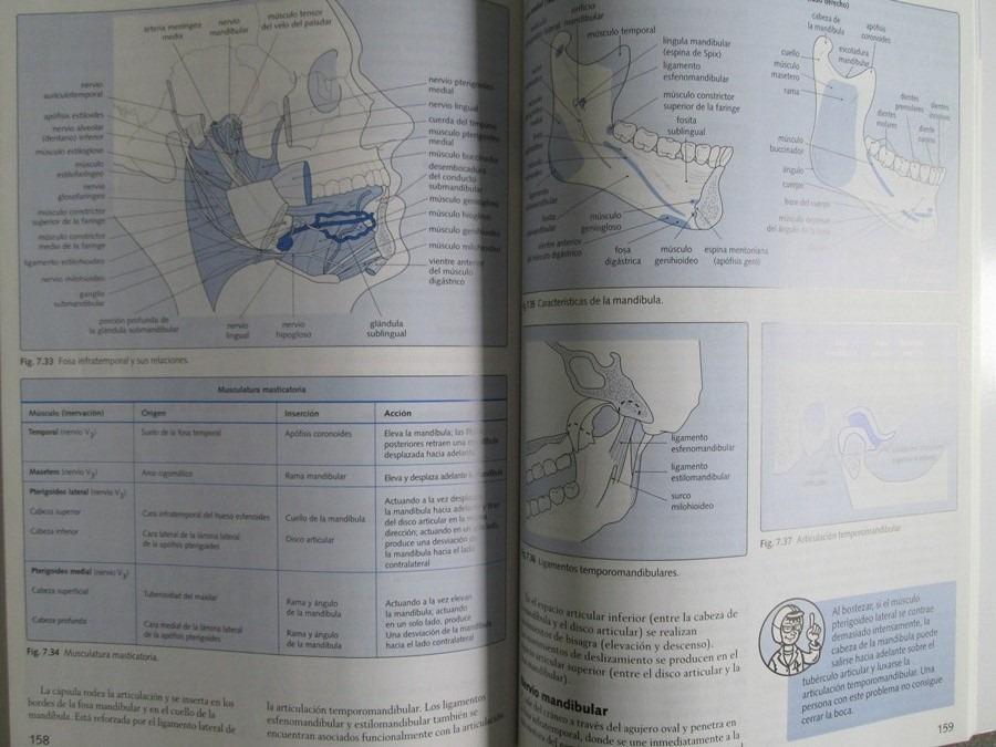 Lo Esencial En Anatomía. Cursos Crash / M. Dykes / Elsevier ...