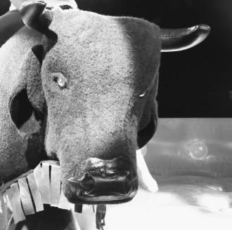 locação touro mecânico